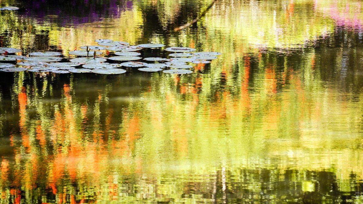 victoria-munoz-photo-nature-017