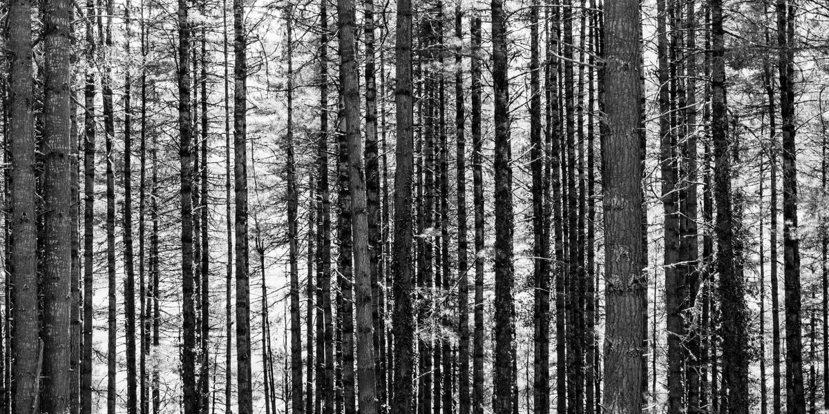 victoria-munoz-photo-nature-018