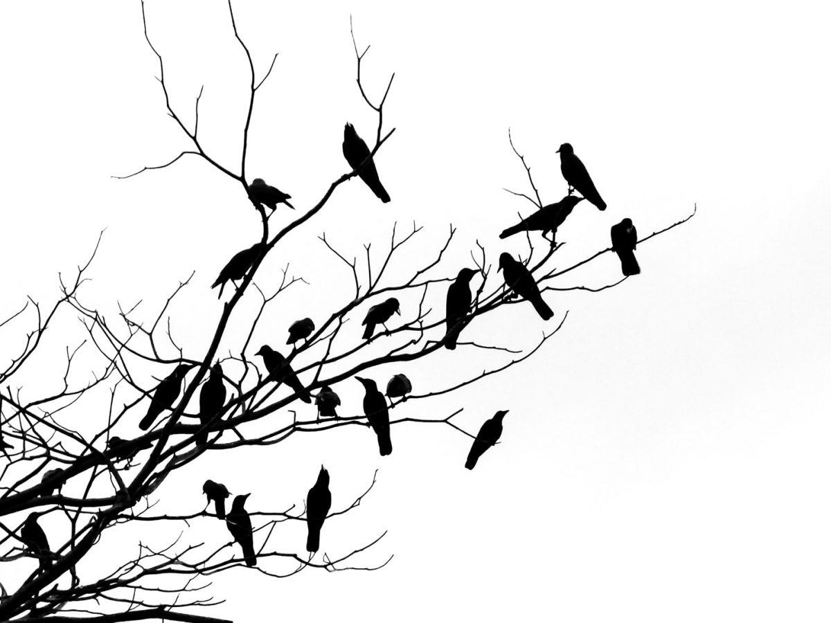 victoria-munoz-photo-nature-026